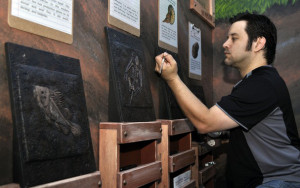 Installing the Fossil Rubbings