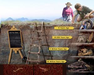 Fossil Timeline Concept Sketch