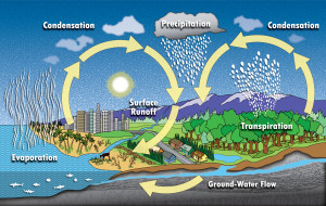 Water Cycle Lenticular Interactive